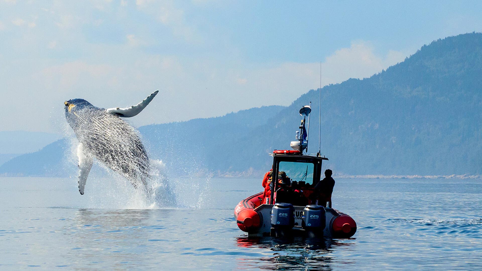 Tadoussac et ses baleines