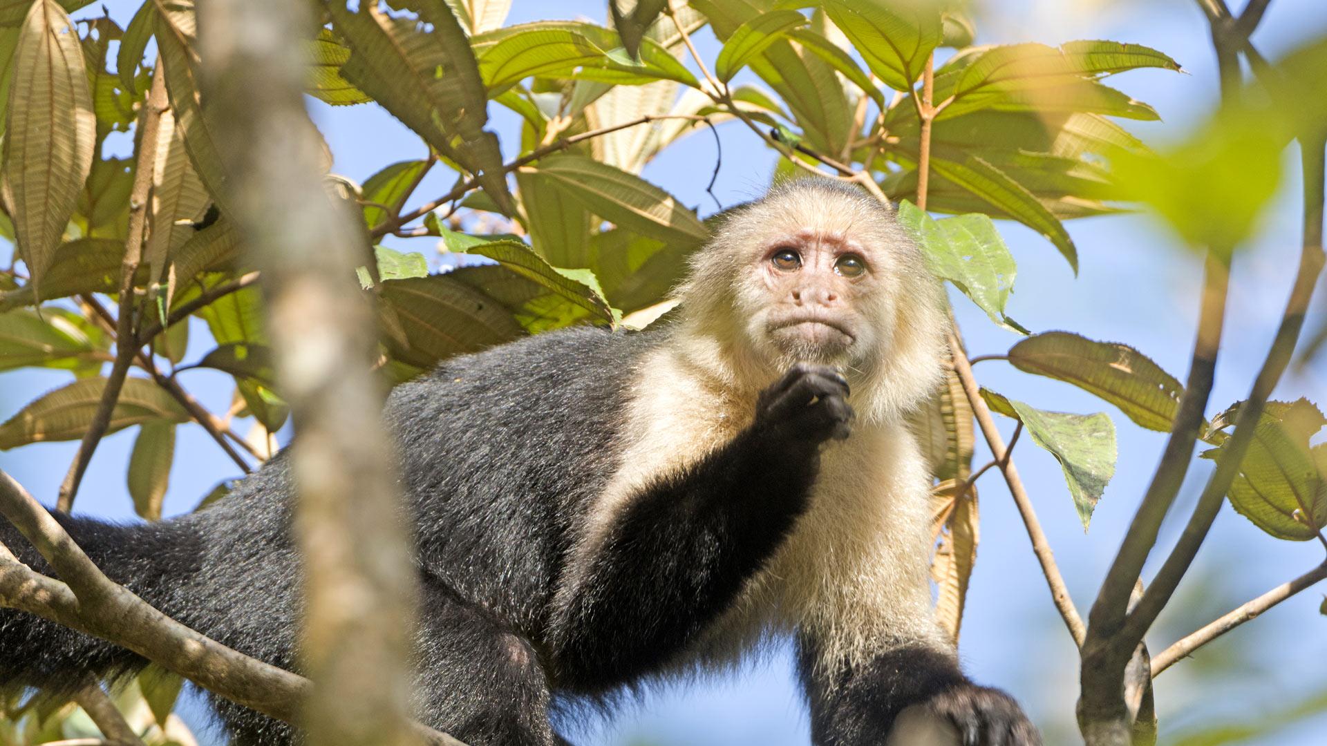 Les incontournables du Costa Rica en formule active