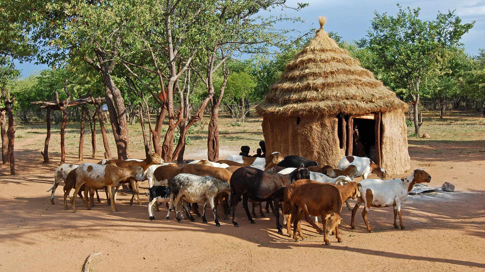 Safaris, dunes et ethnies en Namibie