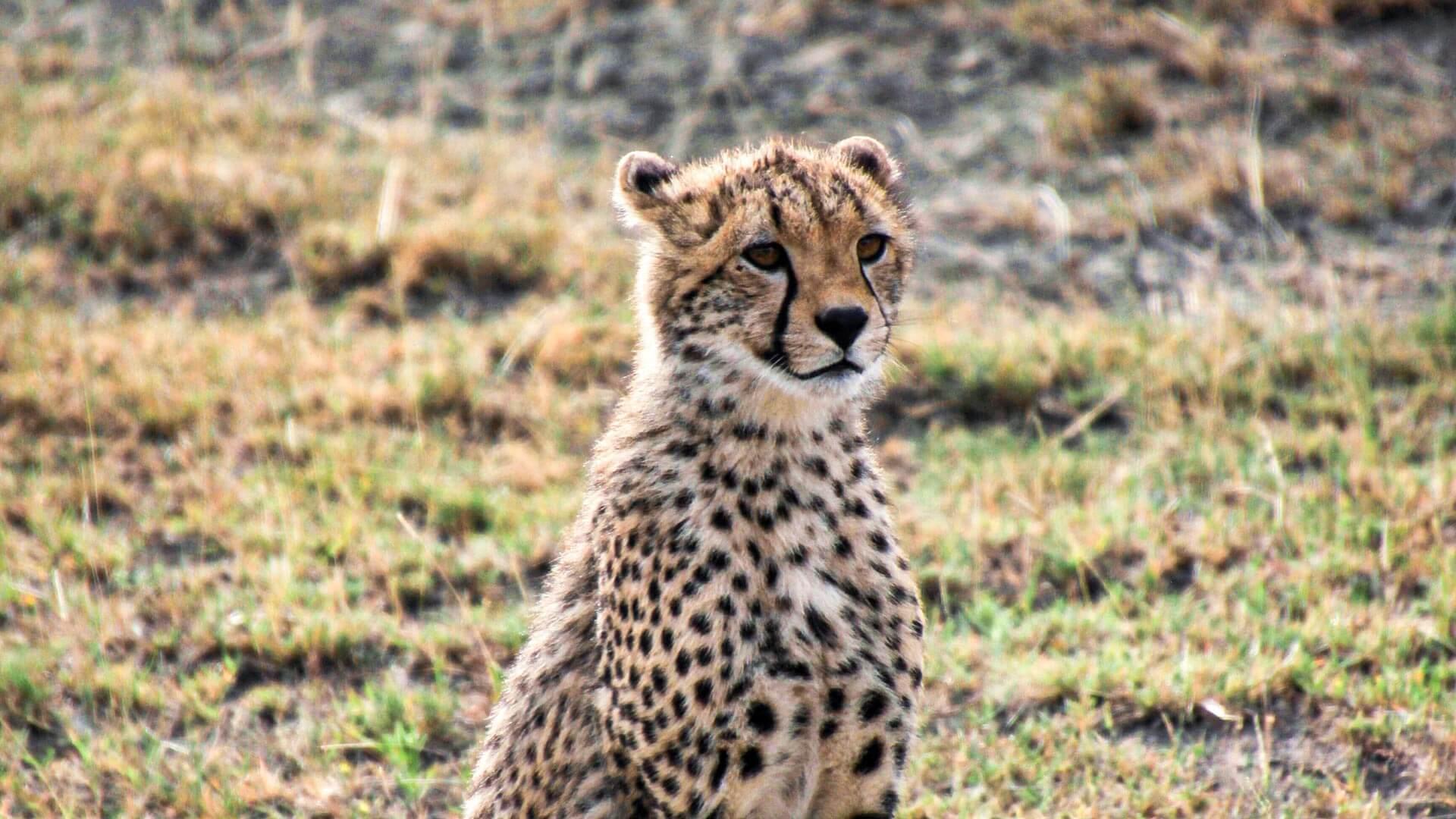 Safaris en Tanzanie et détente sur l