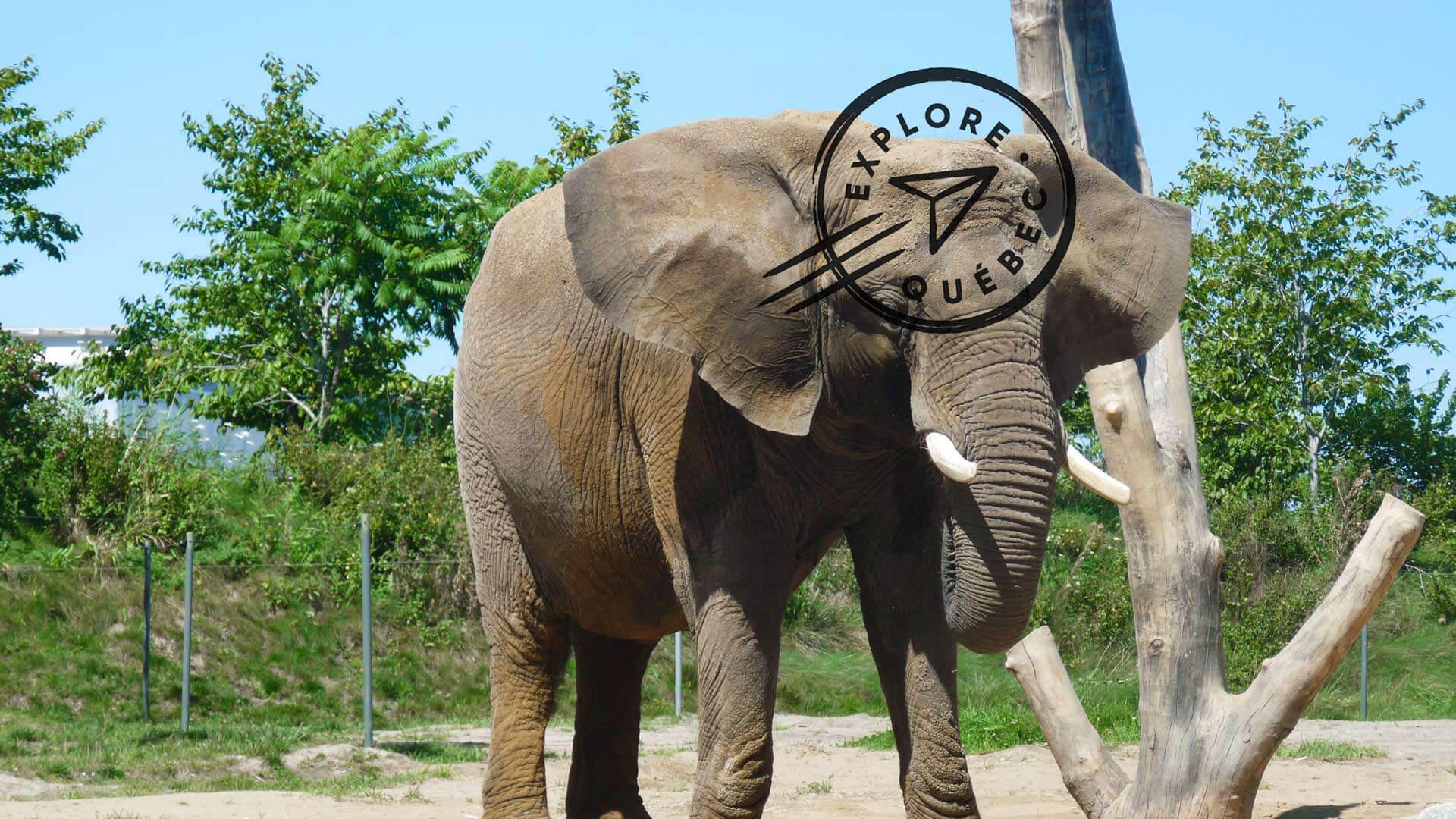 Le Zoo de Granby et les Cantons-de-l