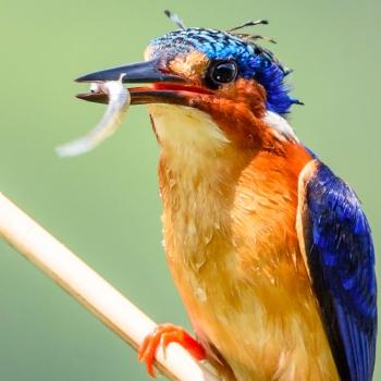 Les merveilles de Madagascar