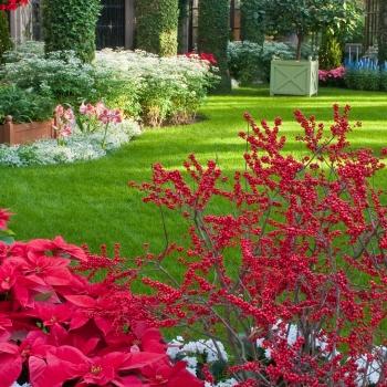 Jardins de Longwood à Noël
