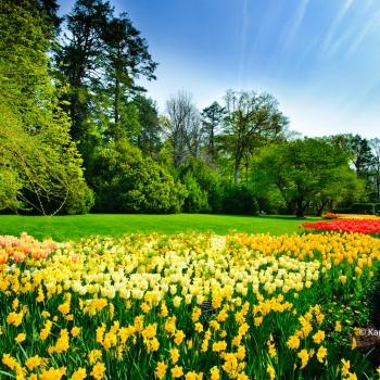 Les jardins de la Virginie