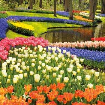 Hollande en fleur